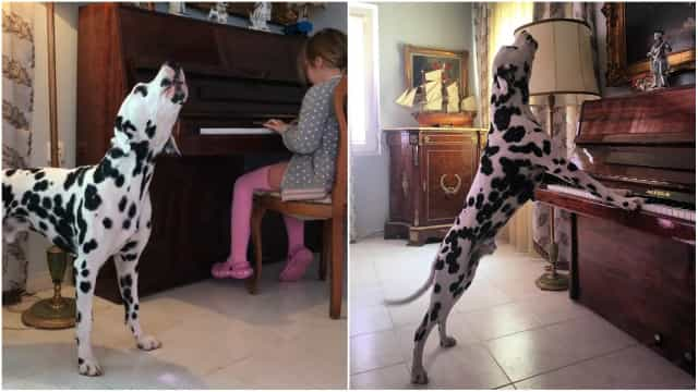 b0e3dc85 Dalmatian shows off his musical talents - Buzz Videos - Your Viral ...