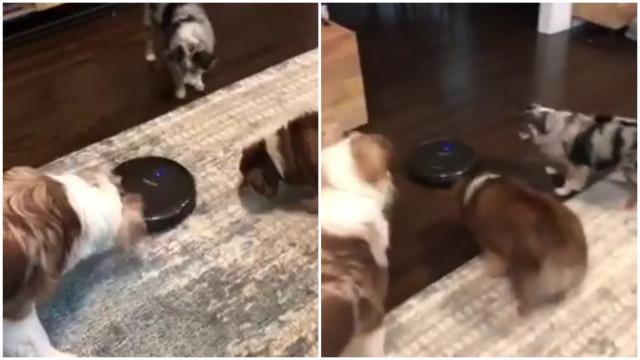 Cani sono sconvolti dal robot aspirapolvere buzz videos your