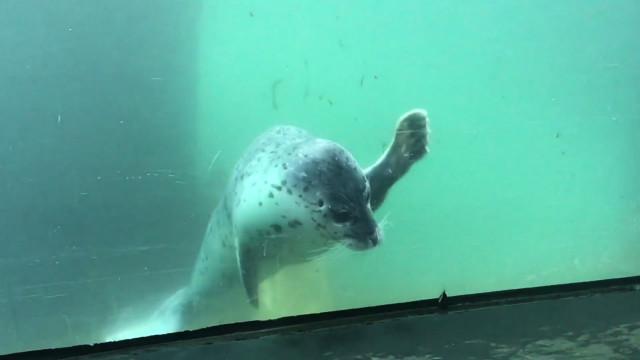 Momento adorabile foca gioca con una farfalla buzz videos