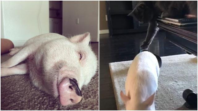 Gatti fanno conoscenza con un nuovo membro della famiglia un