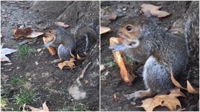 Kostenlose Eichhörnchen Orgie