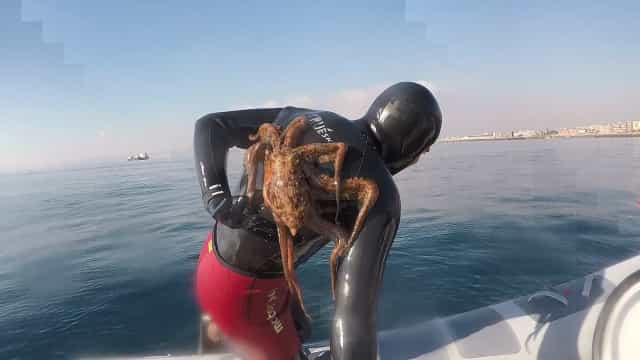 Stuck Stubborn And Always Right >> Stubborn Octopus Stuck On Diver S Back Buzz Videos Your Viral