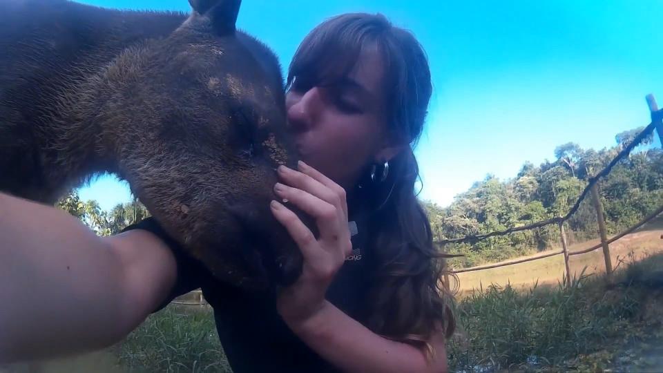 Adorable baby tapir shows some love - Buzz Videos