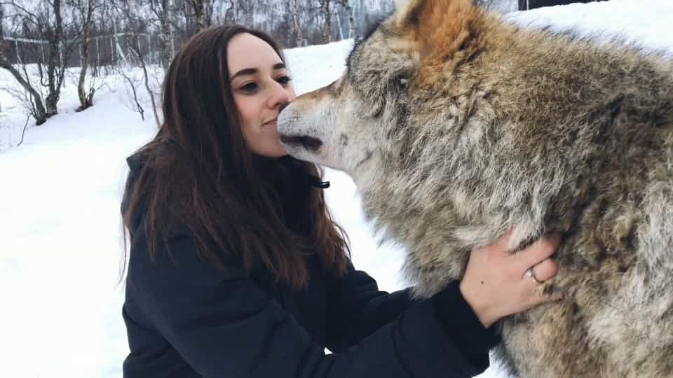 Couple celebrates wedding anniversary with wolves - Buzz Videos