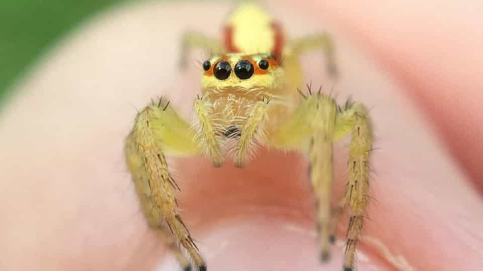 brand new e37be 383d5 Fascinating close-up of baby jumping spider - Buzz Videos - Your Viral  videos website!